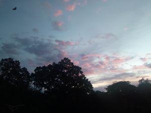 Sunset purple sky