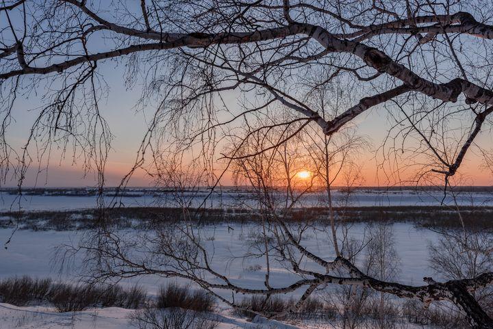 Birch tree and setting sun - Dobrydnev