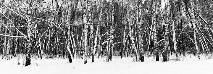 White birch and white snow - Dobrydnev