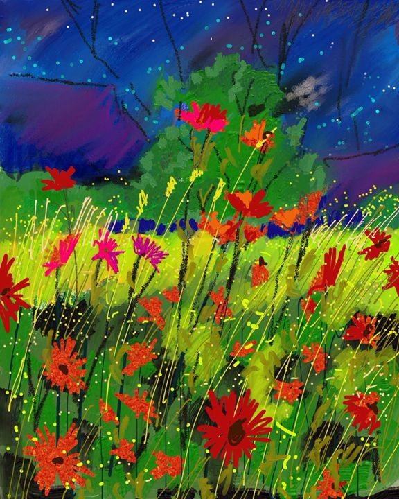 Starry night over wild flowers - Stetson Creek Gallery