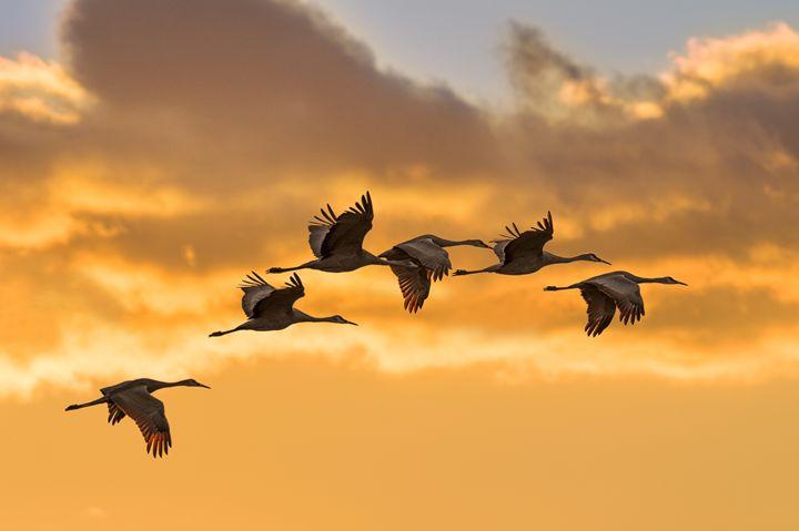 Migration - Fly Eye