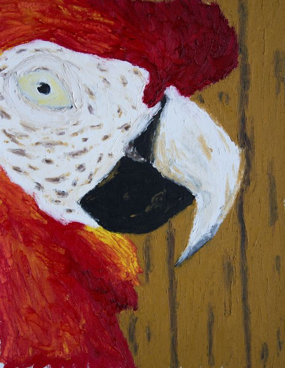 Kiwi's Stare - J Tuttle Art
