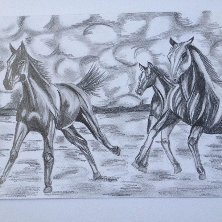 Wild horses - John Stefanos