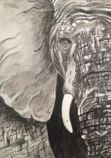 Elephant - John Stefanos