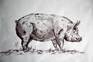 Monochrome Pig