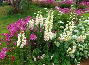 Spring Field of Flowers