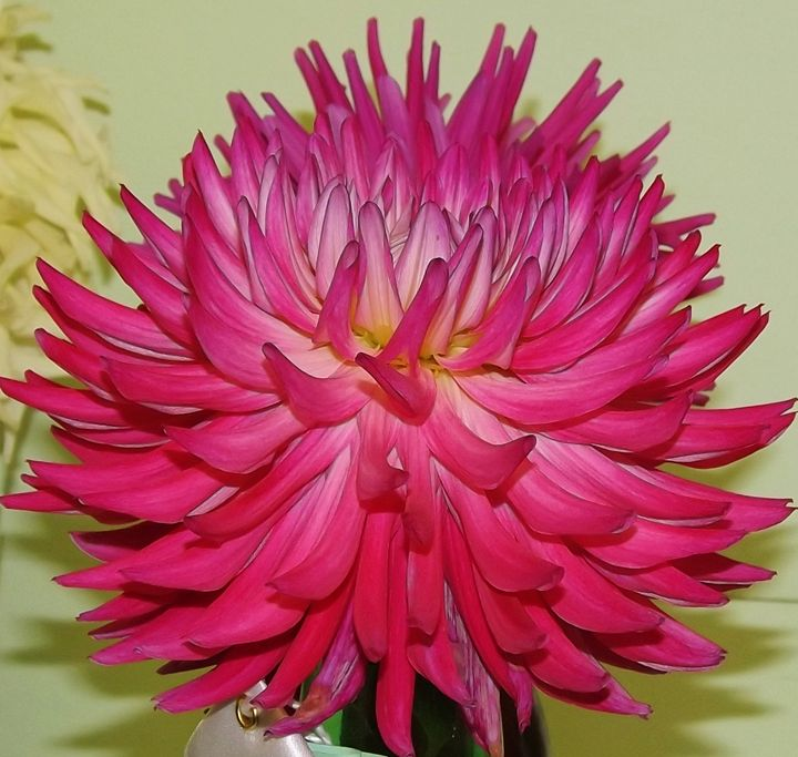 Hot Pink Dahlia - Journey On Gallery