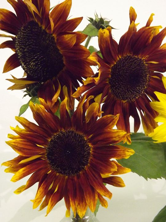 Trio of Dark Sunflowers - Journey On Gallery