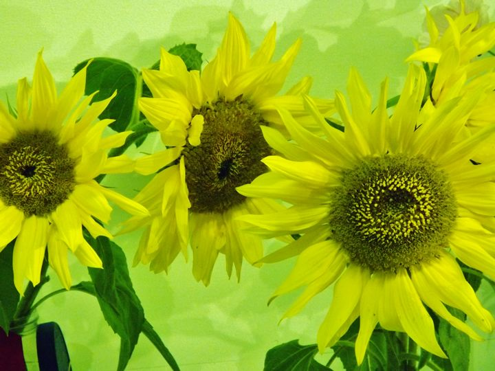 Yellow Sunflowers - Journey On Gallery