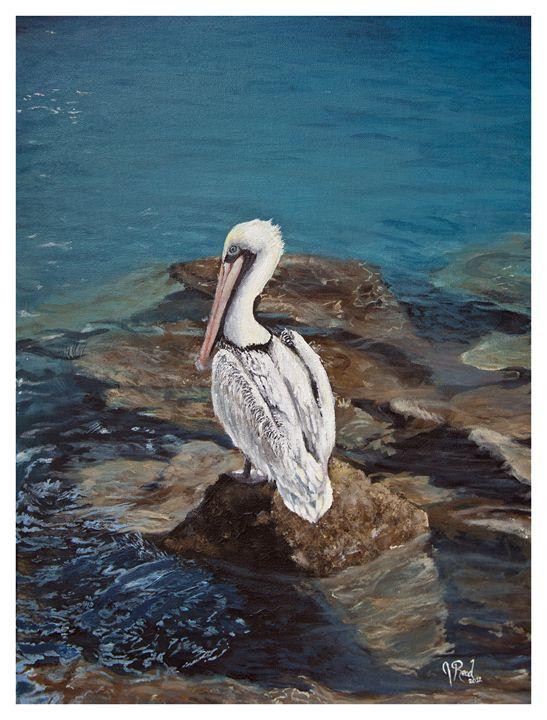 Pelicans on the Rocks - J Reed Studios
