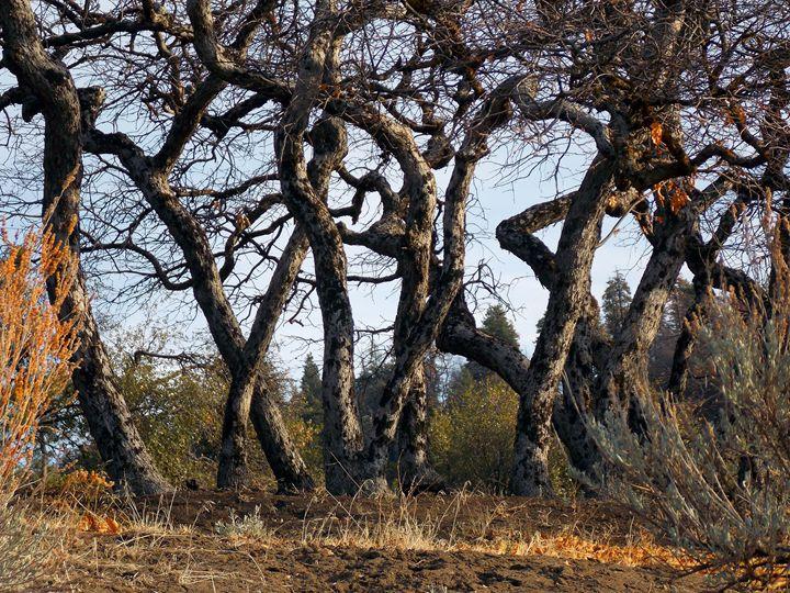 autumn chaparral 1 - John Rand