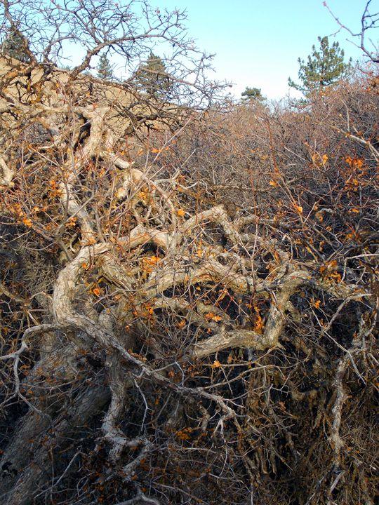 Autumn Chaparral 4 - John Rand