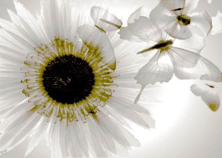 Transparent flower - digitalart Rob Elfferich