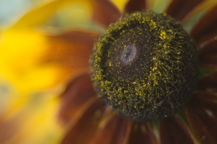 Close-Up Flower - Brie A. Edwards Photography