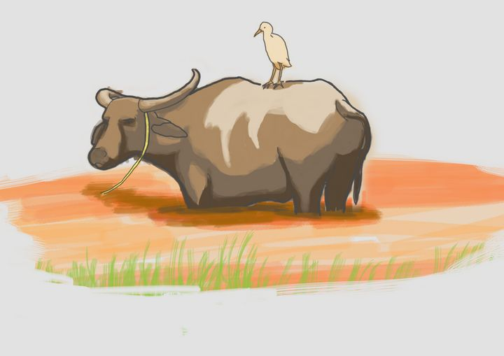 Water buffalo (Kerbau) - syafie1104
