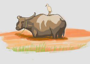 Water buffalo (Kerbau)
