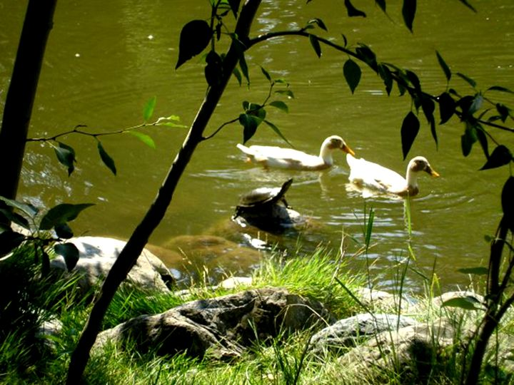 Strange Pondfellows - Scribblings/Photography