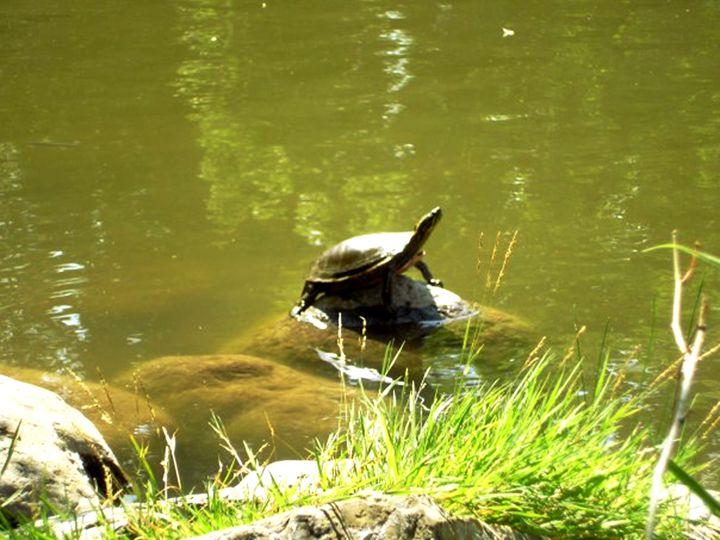 Turtle Rock - Scribblings/Photography