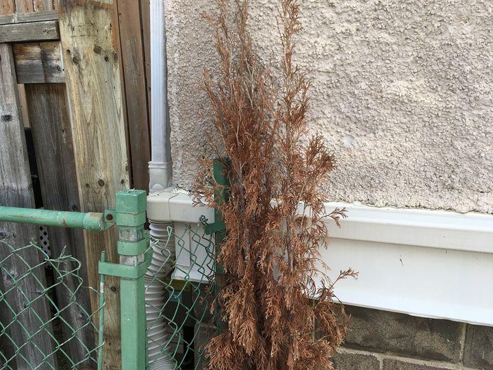 Small tree plant - Cassandra Lewis