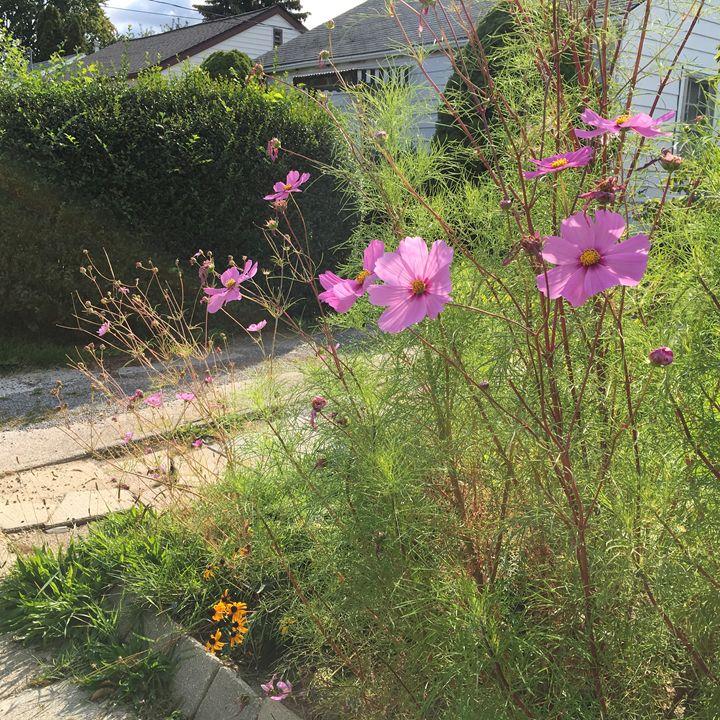 Pink flowers - Cassandra Lewis