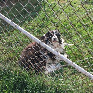 Dog laying on grass - Cassandra Lewis