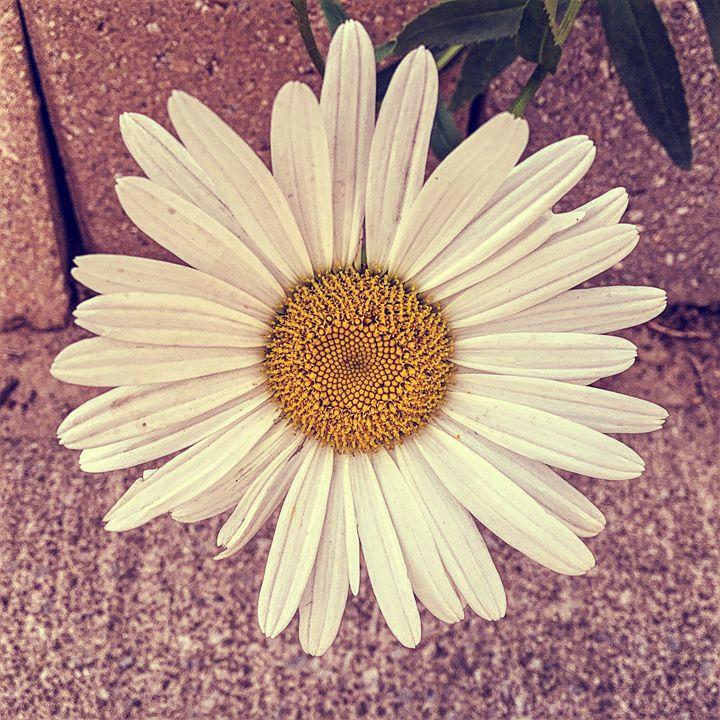Flower - Cassandra Lewis