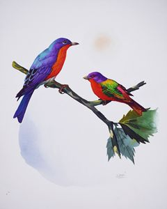 Eastern Bluebird & Painted Bunting