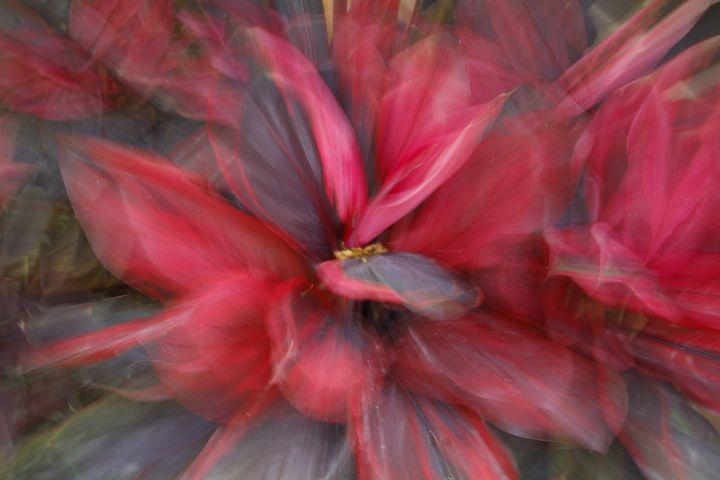 Abstract Flower - hkalavisualart