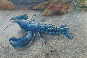 Blue Lobster