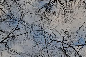Infinity of fractals