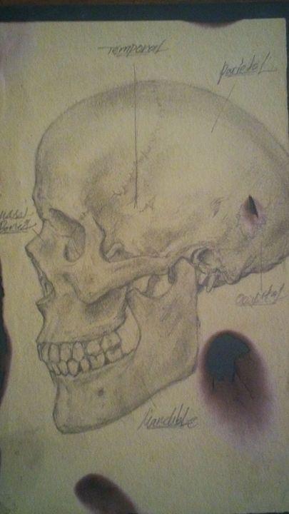 skull - Daniel Guatimea