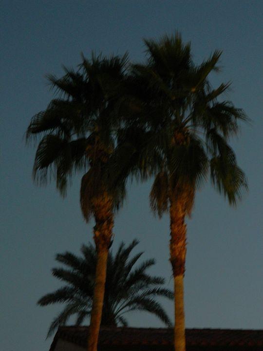 Night Palms - Snobyrdz Photoart