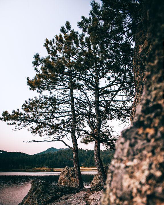 Trees of Summer - Preston Buechler