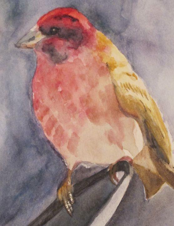Watercolor Wren - HasslerArtisan
