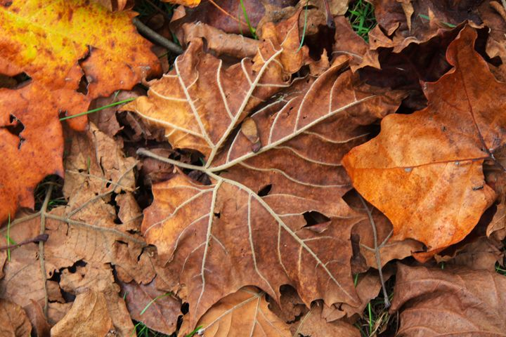 Pile of leaves - Wendy Theisen Halsey Photography