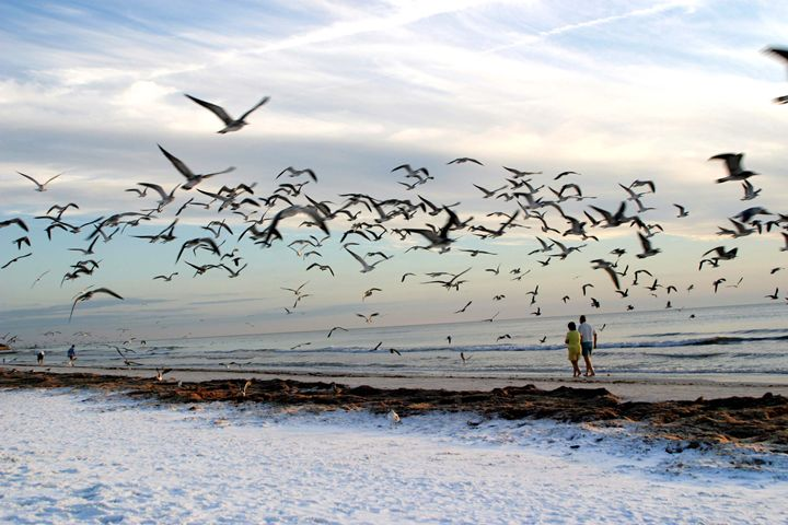 blasted by seagulls - Wendy Theisen Halsey Photography
