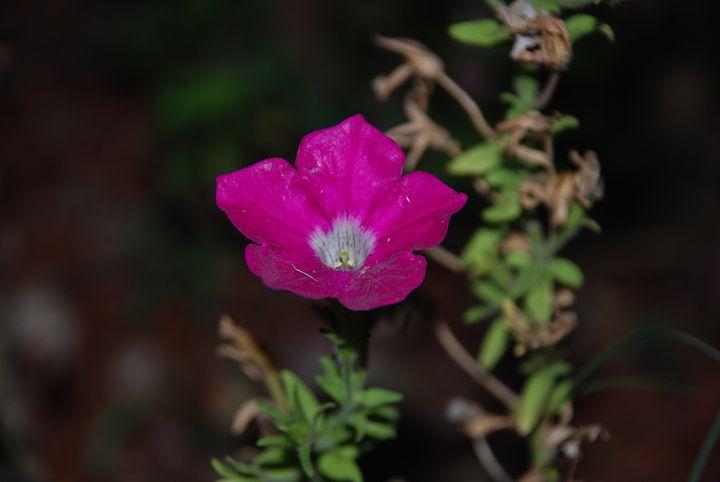 pink flower - Kelseys Gallery