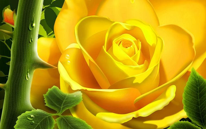 yellow rose - lucky the creator