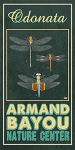 Armand Bayou Odonata