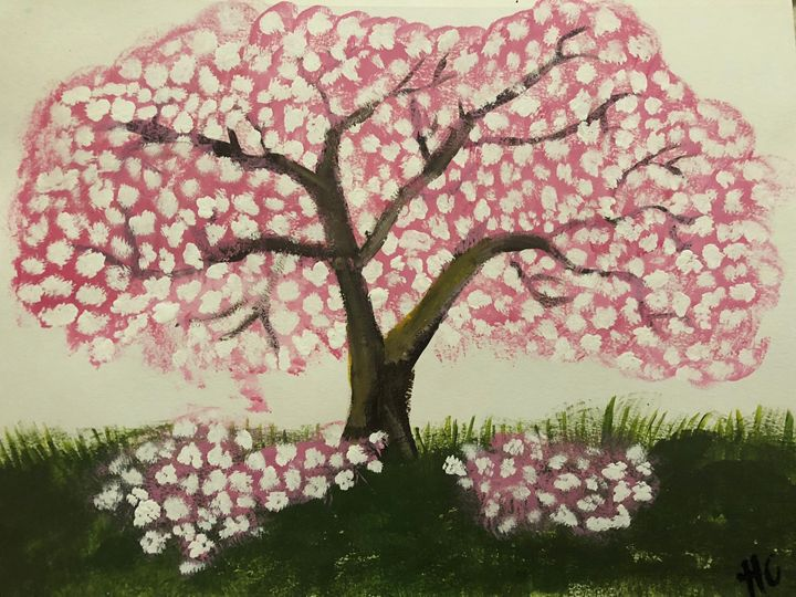 Cherry tree - HannahC