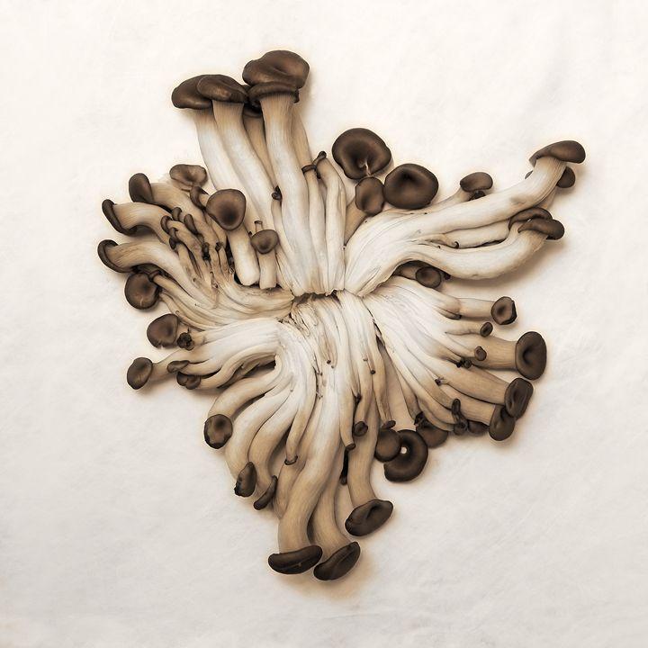 Baby Oyster Mushroom - Fine Art by Viktor Savchenko