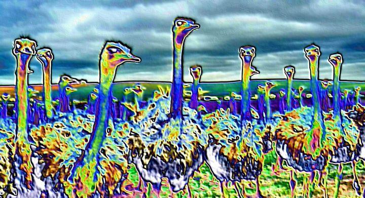 Ostrichs - Rene art