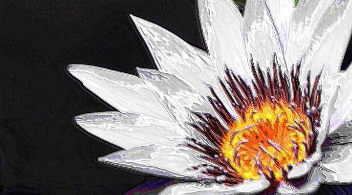 Water lilly - Rene art