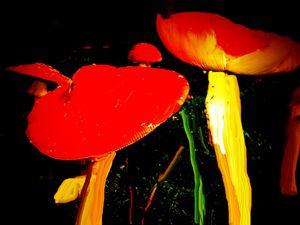 Mushroom night