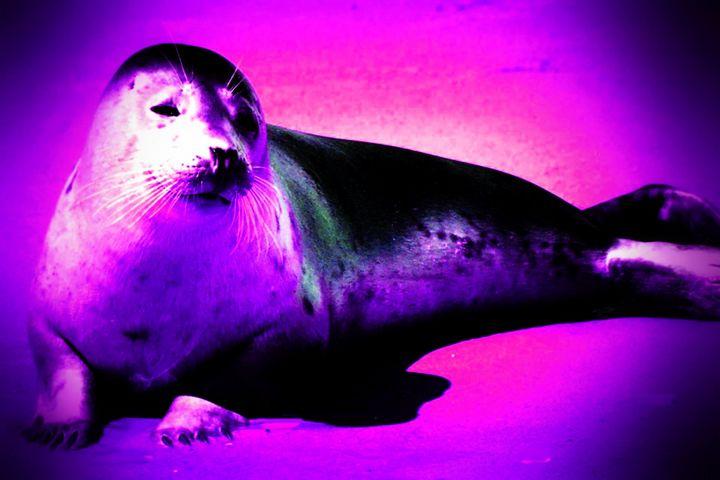 Seal - Rene art