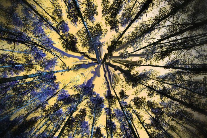 Trees nr 55 - Rene art