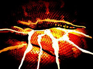 Snake skin  nr 255