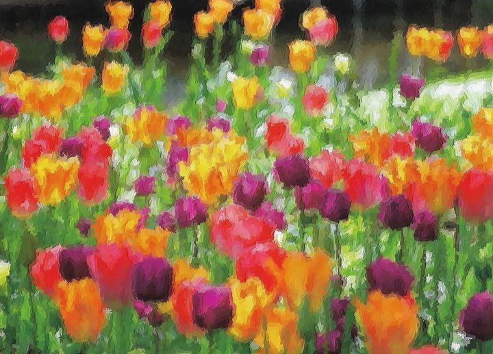 Dutch rare tulips - Rene art