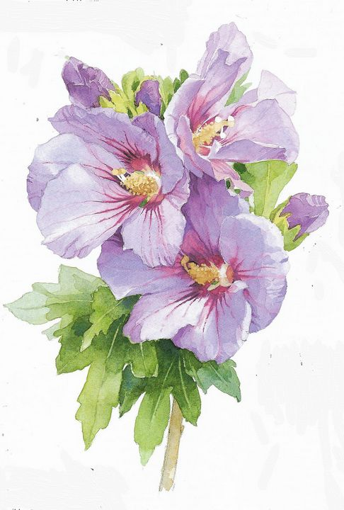 Hibiscus - Rene art