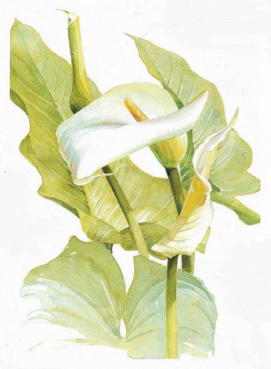 Zantedeschia acthiopica - Rene art
